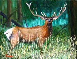 Bull Elk-C-3-JES