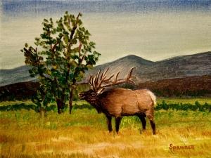 Bull Elk-TRNP-1-C-JES